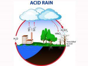 The harm of acid rain