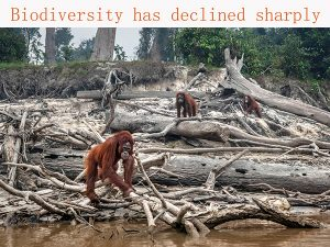 Factors for the sharp decline in biodiversity